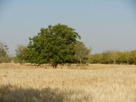 Jadan field