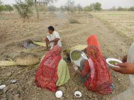 Prashad crops