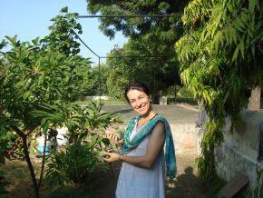Sitaji with young sitaphal fruits