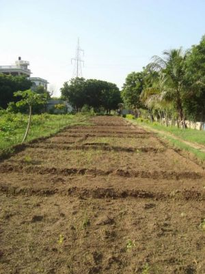 We cultivated 10 beds for autumn seeds west part of shiv bagh min