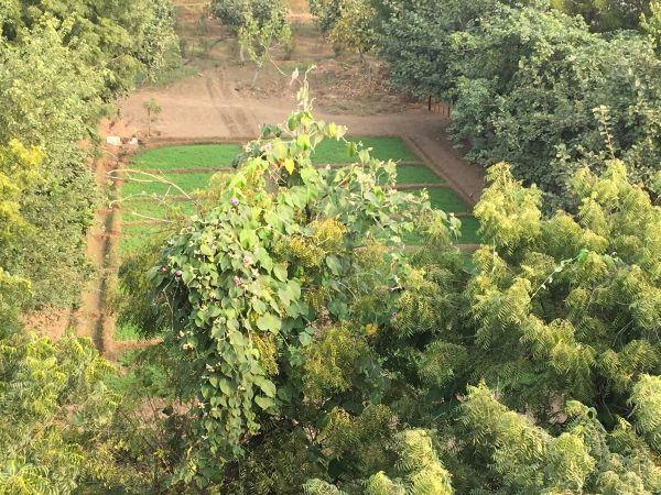 aerial view of workshop garden 1200
