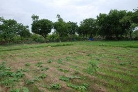 main monsoon veggie area 1200