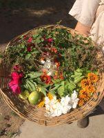 salad mix for Babji 1200