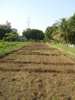 we cultivated 10 beds for autumn seeds west part of Shiv Bagh