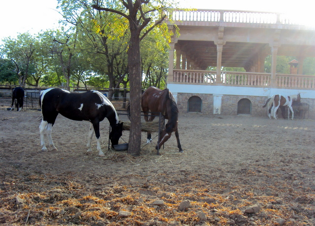 17 Horses enjoying their summer open air residence