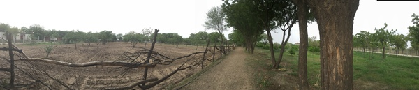 new 60 metre fence to protect corn and veggie field 600