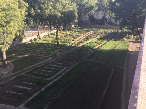 aerial view of 2015-2016 salad plantation 600