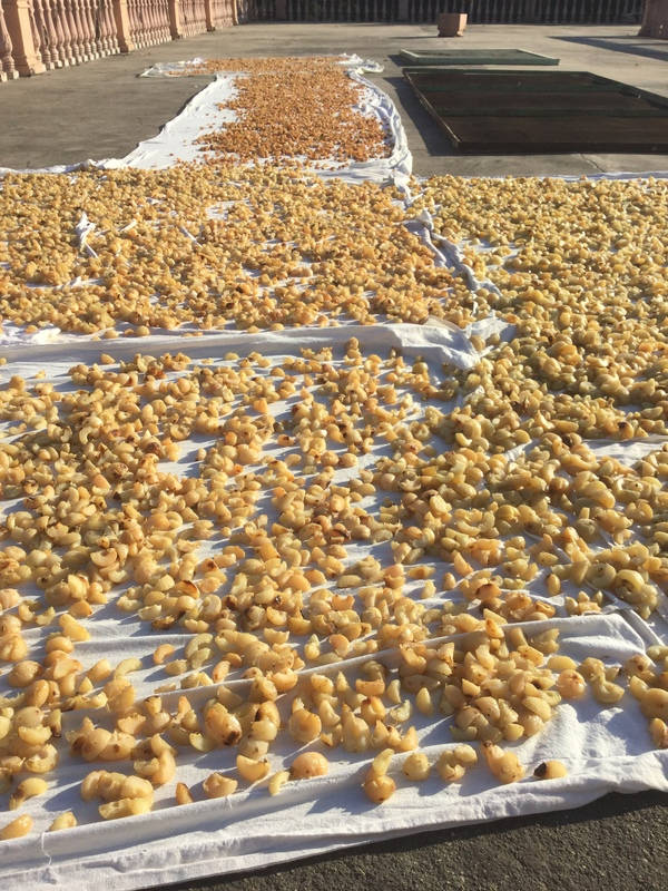 drying the parboiled fruits on the roof after segments removed from seed 600