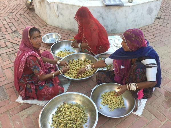 garden ladies pitting amla fruits 600