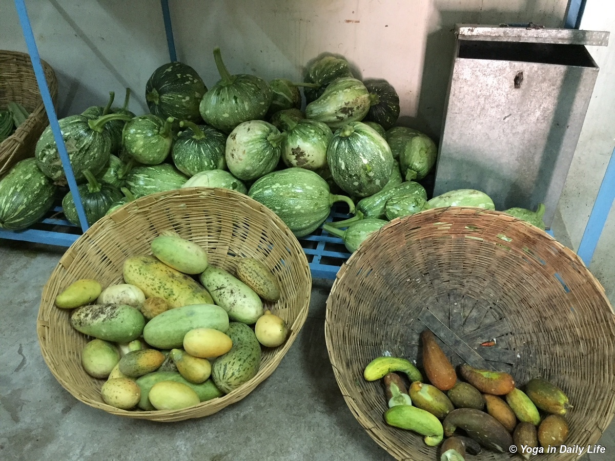 Monsoon gourds