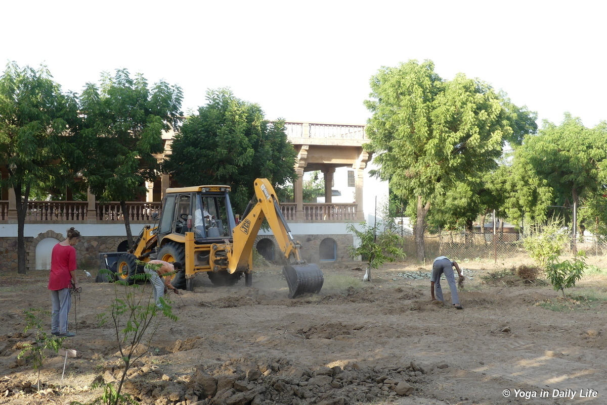 Removing fig roots from the closed plantation