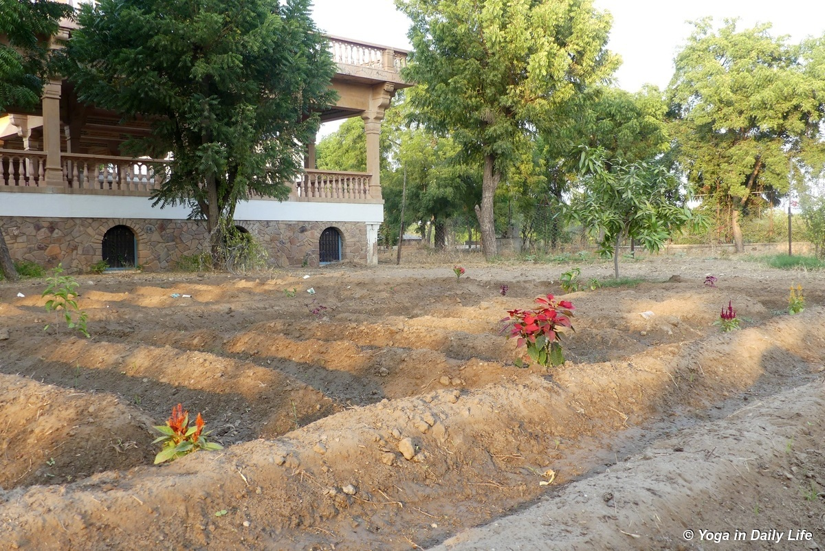 Weeding in the Shiv Bagh - most of the grass is eaten by our horses