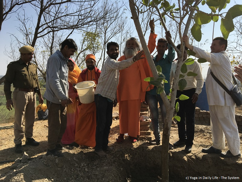 Sacred Banyan Tree for World Peace planted by Vishwaguruji in OM Ashram