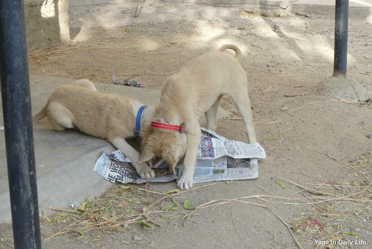 puppies enjoy playing with newspaper