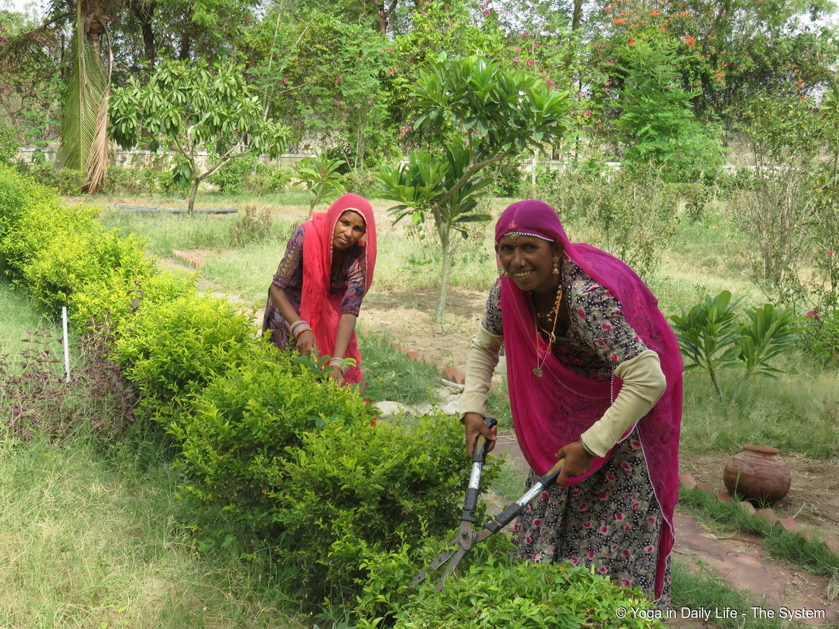 Dhapu and Parsi pruning the golden hedge