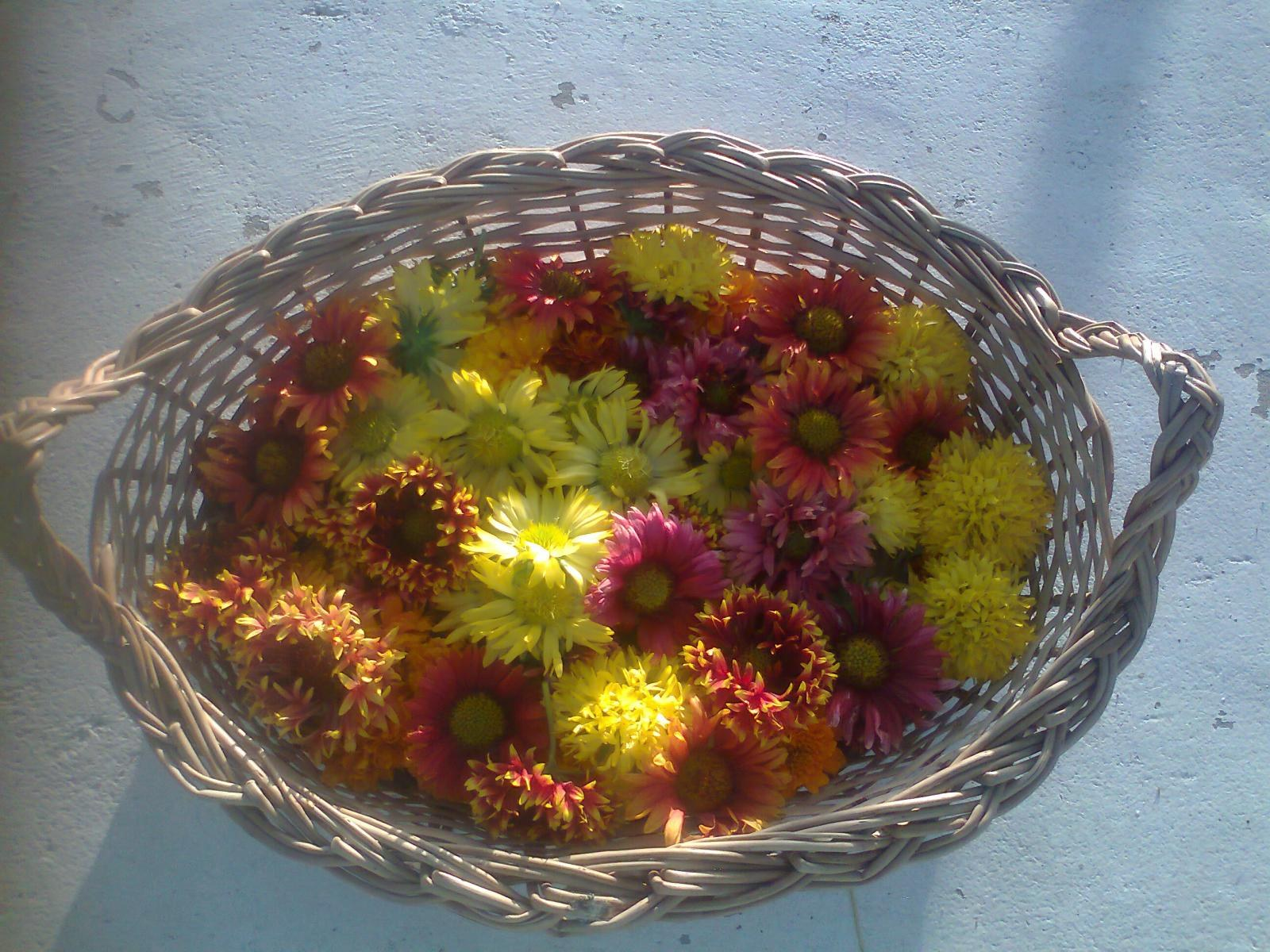 BLANKET FLOWERS READY TO DECORATE ALTARS