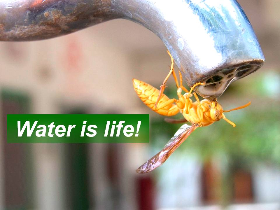 https://www.omashram.com/images/water-is-life/thirsty-bee.jpg