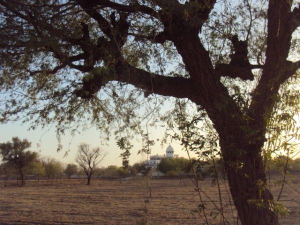 1 Summer View of Ashram through branches of Khejri Tree