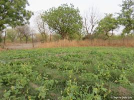 2018 cucumber plantation Big Garden 72dpi 1200 wm