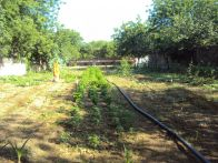 new permaculture garden
