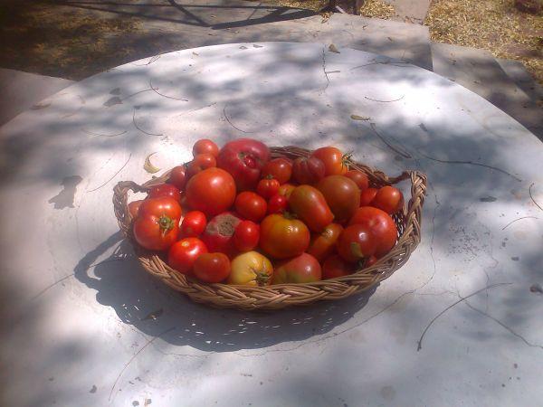 Finally - some harvest!