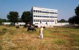 Nipal White House