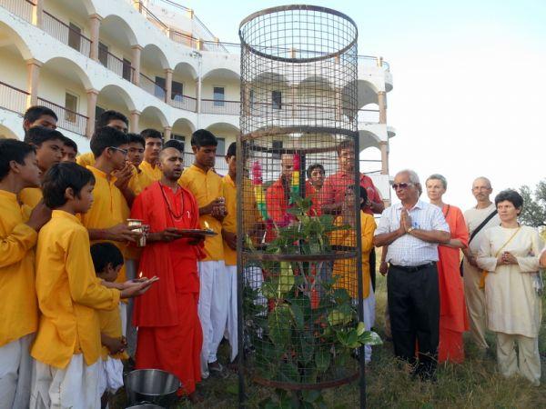Om-Ashram-Peace-Tree-2014-10