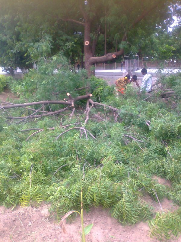 PRUNING ACTION WITH CHAIN SAW