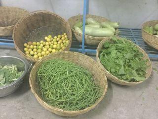 winter salad and daycon radish (mooli)