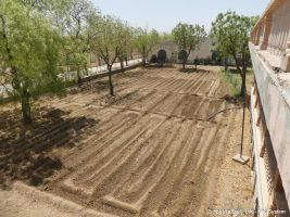 Area behind cool room prepared for cowpeas and round gourd