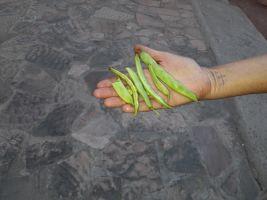 borlotti beans 600