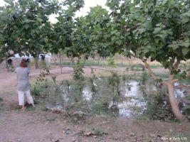 flooding the rose and fig area 72dpi 1200 wm