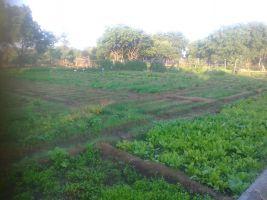 full greens for full iron supplement 1200