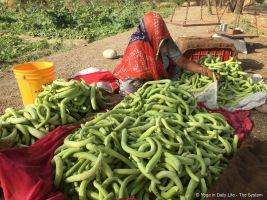 Sorting cucumbers