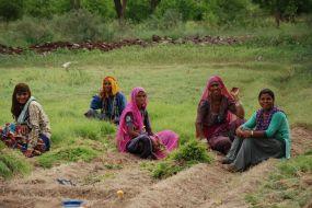 heavy weeds in sakarkand plantation 1200