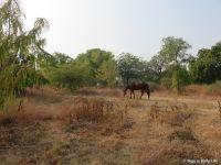 Horses grazing in Big Garden
