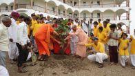Planting Iccha world peace tree