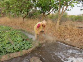 irrigating the cucumbers 72dpi 1200 wm