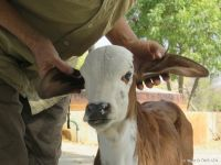 lakshmi at 5 days old