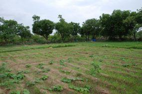 main monsoon veggie area 1200