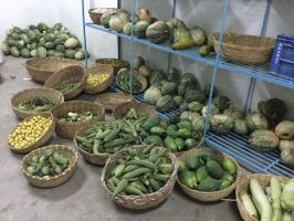 monsoon veggies stored at 17 degrees celsius