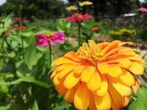 seeds from kailash ashram 600
