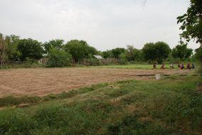 sweet potato field weeding 1200