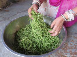 the tasty pod of the khejri tree 72dpi 1200 wm