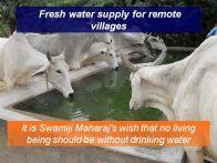water supply animals